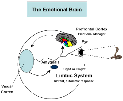 emotional brain